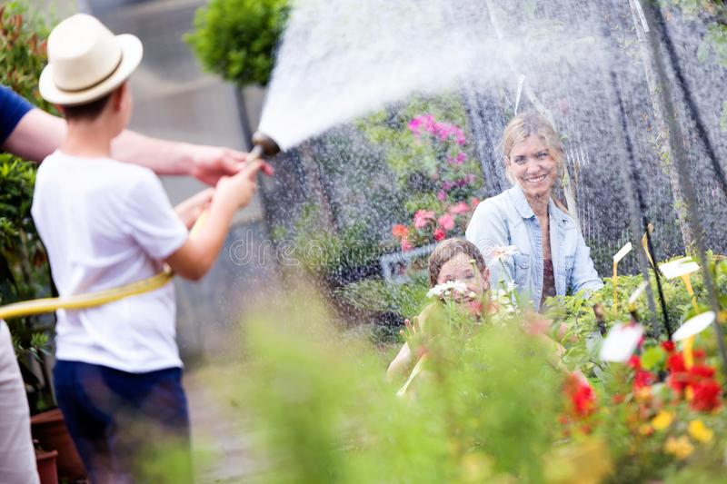 Happy boy playing with hose and wetting his mother and sister. royalty free stock photography