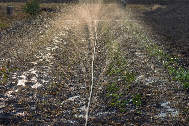 Splashes of water during irrigation in sunlight. Soil wetting royalty free stock image